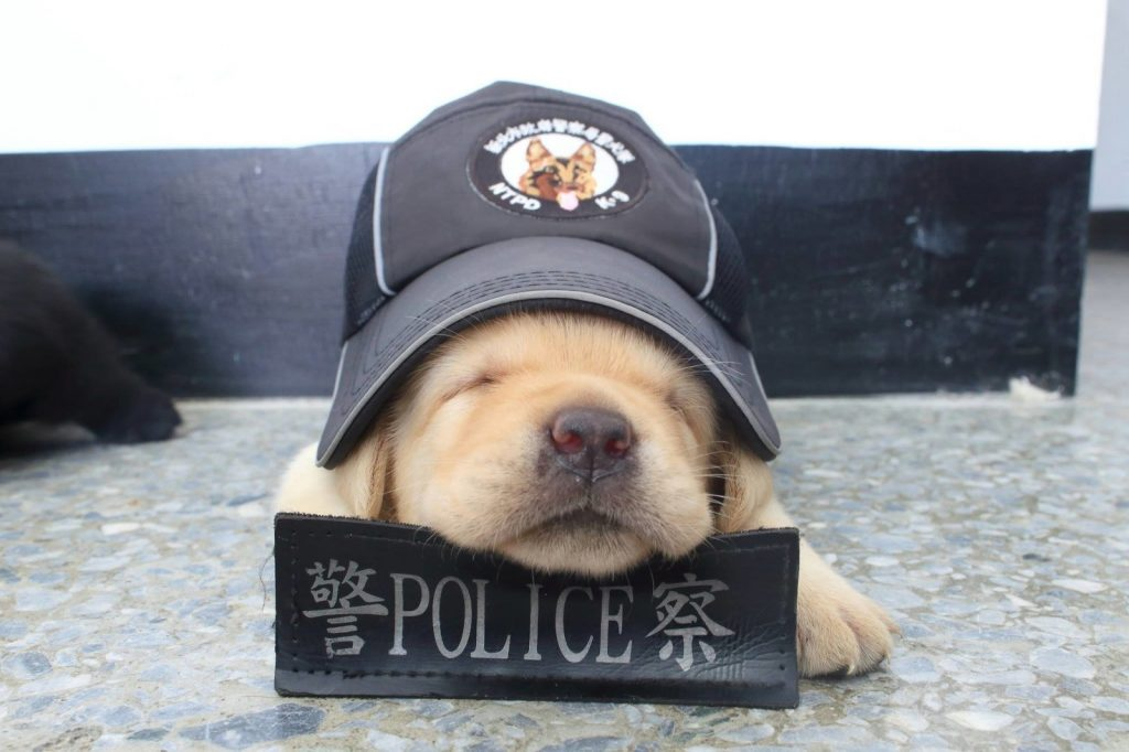 The New Taipei Police Department in Taiwan's K-9 Unit has introduced its newest recruits.
