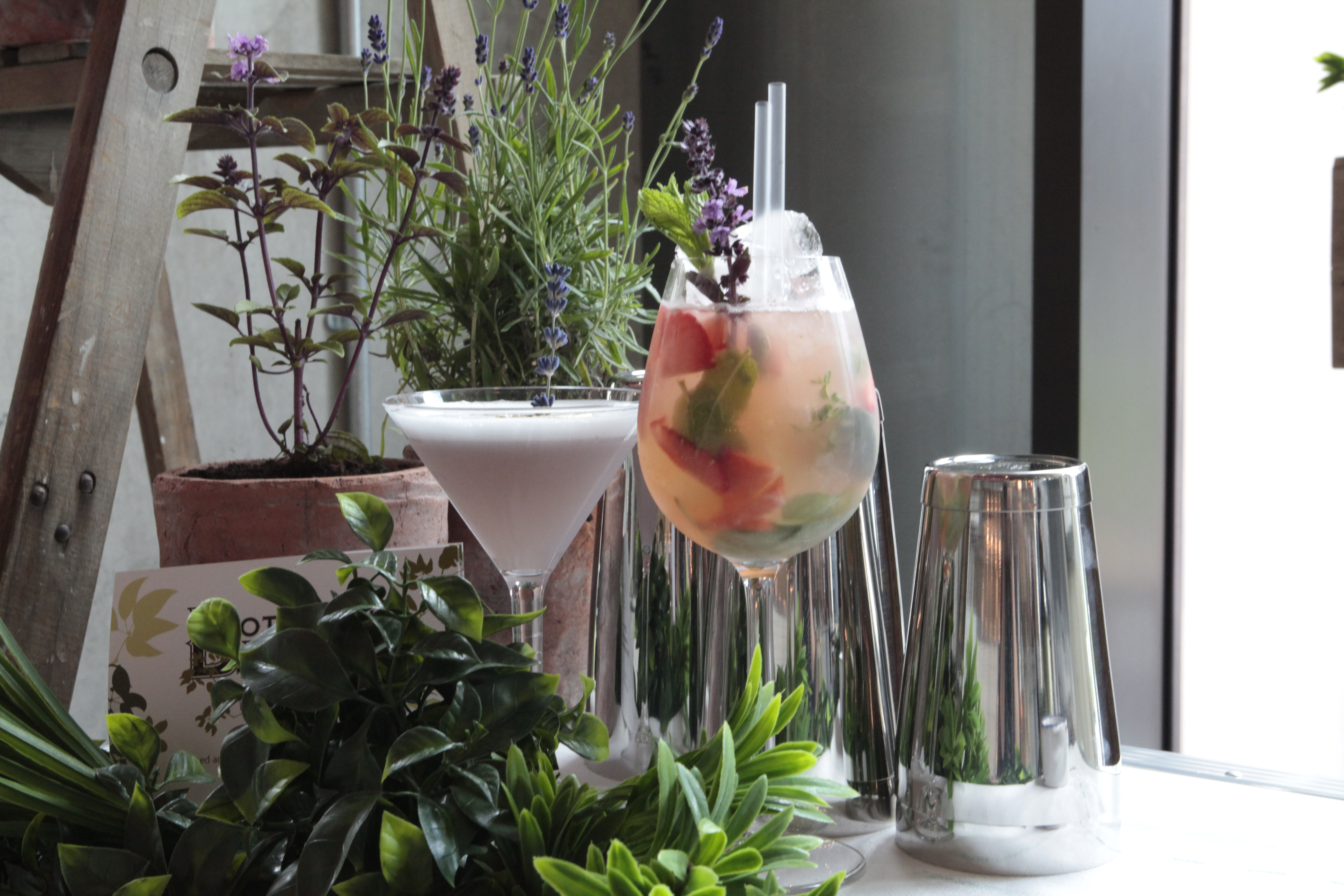 A gin cocktail is shown next to botanicals.