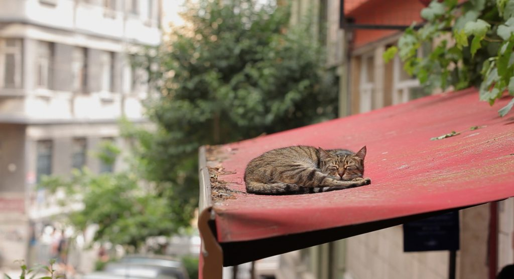 Just one of the scenes from this documentary on Istanbul cats