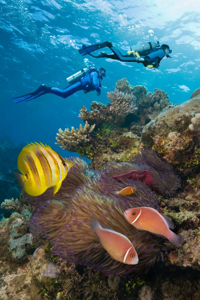 Tropical coaral reef with three clownfish