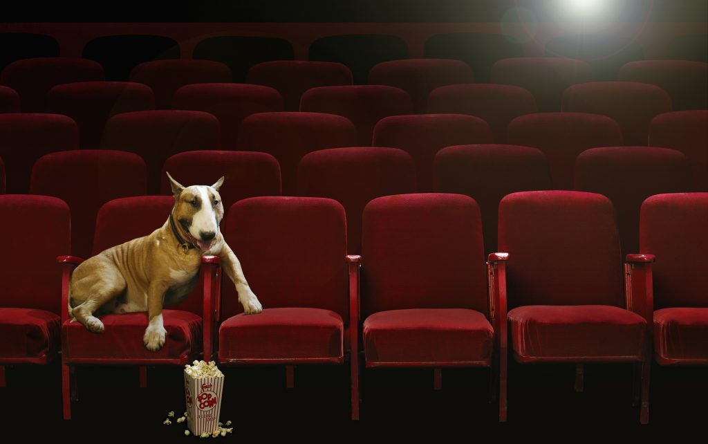 The Canine Film Festival will be held in Miami. Image: Chris Collins