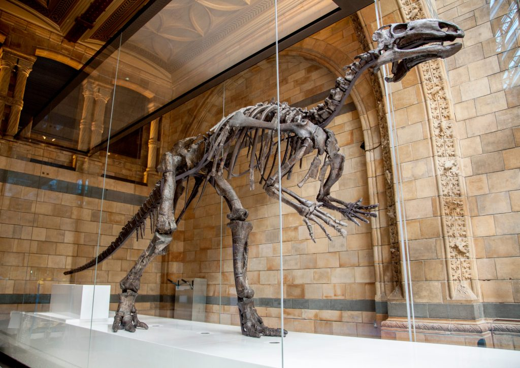 This extinct dinosaur will also be on display in the Hall. Image by Trustees of NHM
