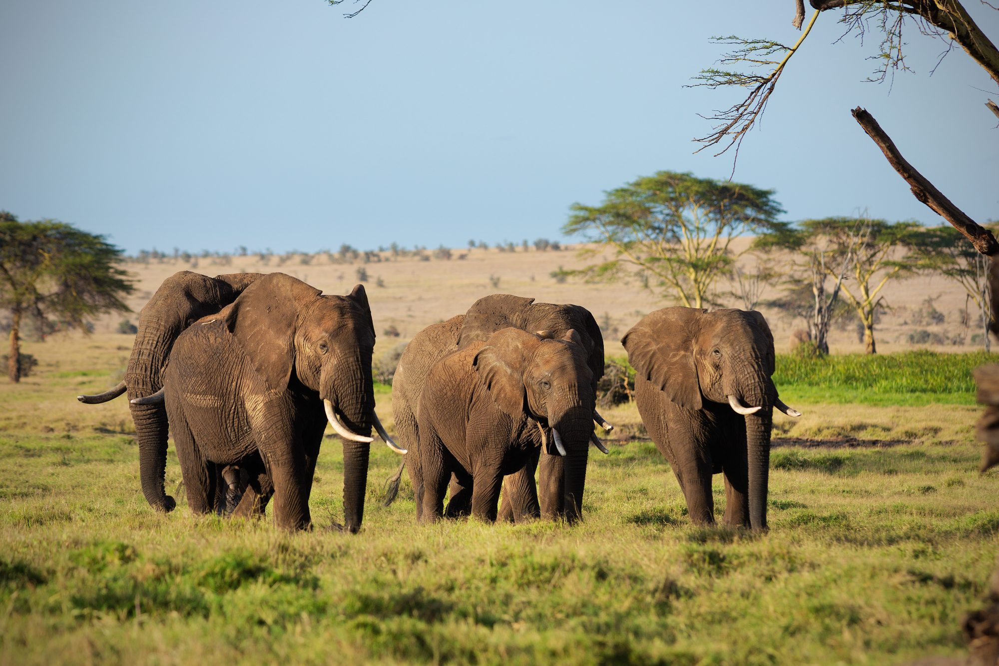 Elephants benefit from the protection brought by the project.