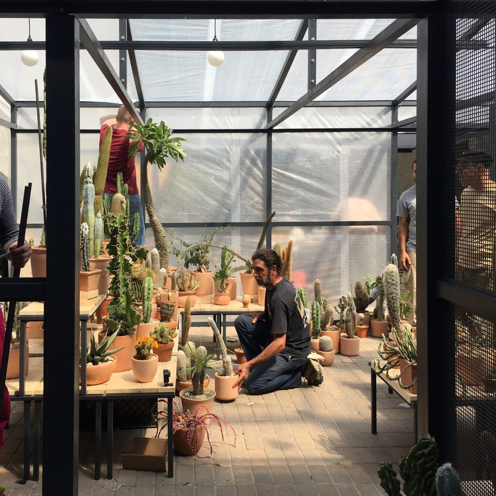 The empty lot in NYC was just right for a summer greenhouse.