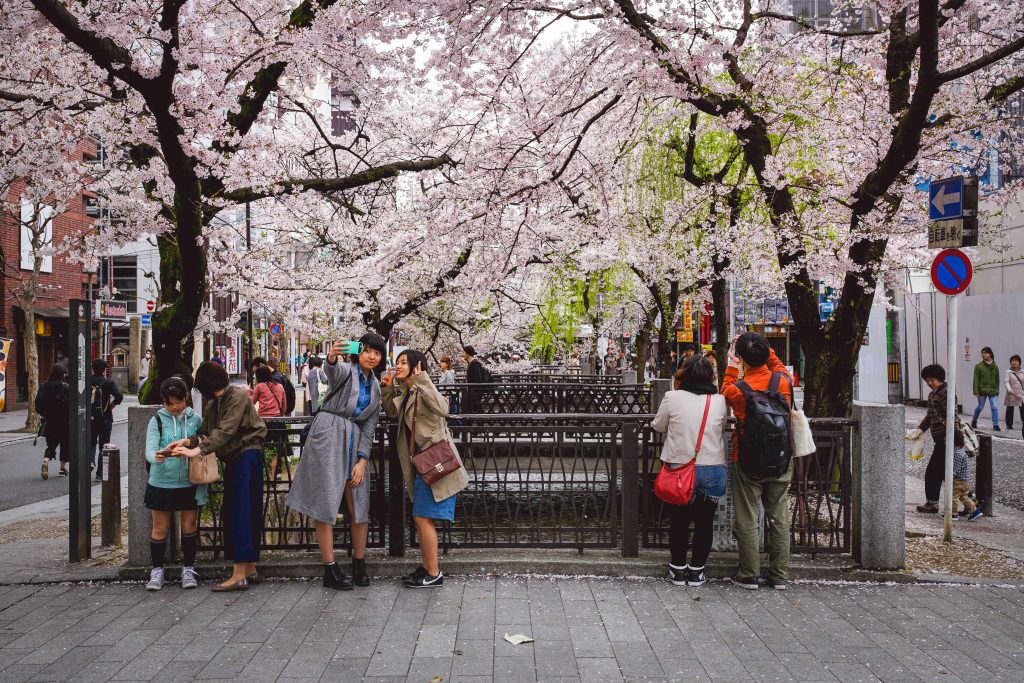 Crowds enjoy the cherry blossoms in Kyoto
