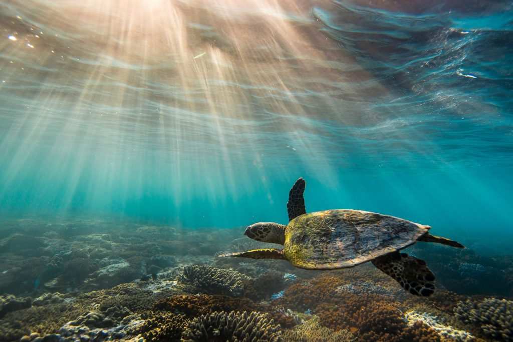 UNESCO give the Great Barrier Reef a price tag