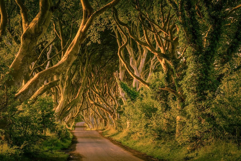 The Dark Hedges in Northern Ireland are one of the filming locations of Game of Thrones.