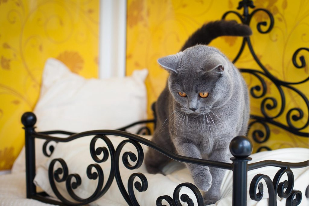 Yes, wrought iron beds are a feature. Image by Longcroft Cat Hotel