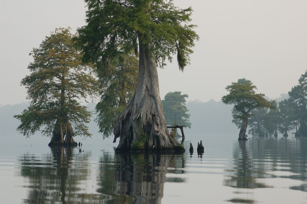 The new federal program will try and reverse centuries of damage. Image by Rebecca Wynn/USFWS