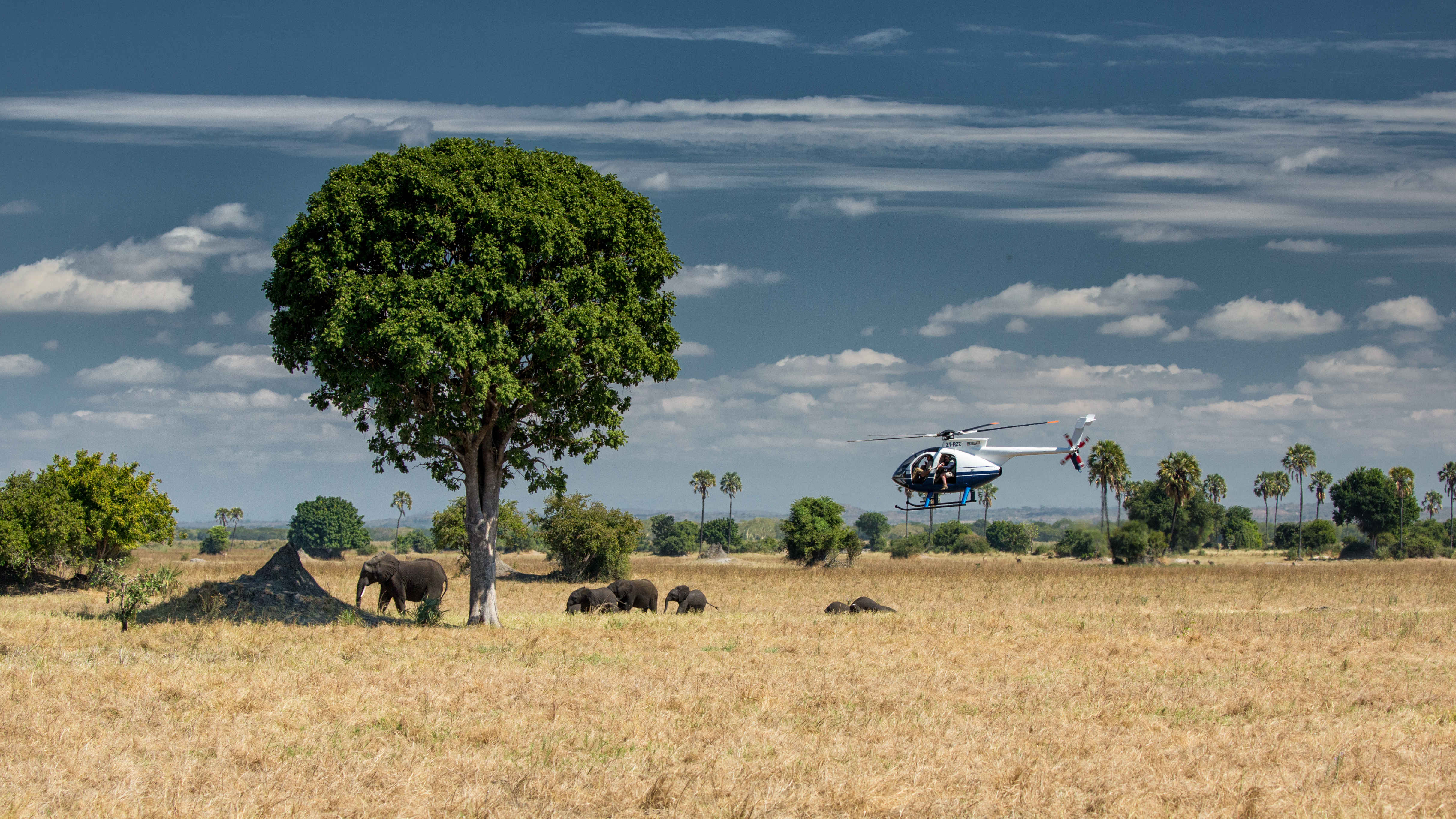 A helicopter lands in a park near some elephants in Malawi.