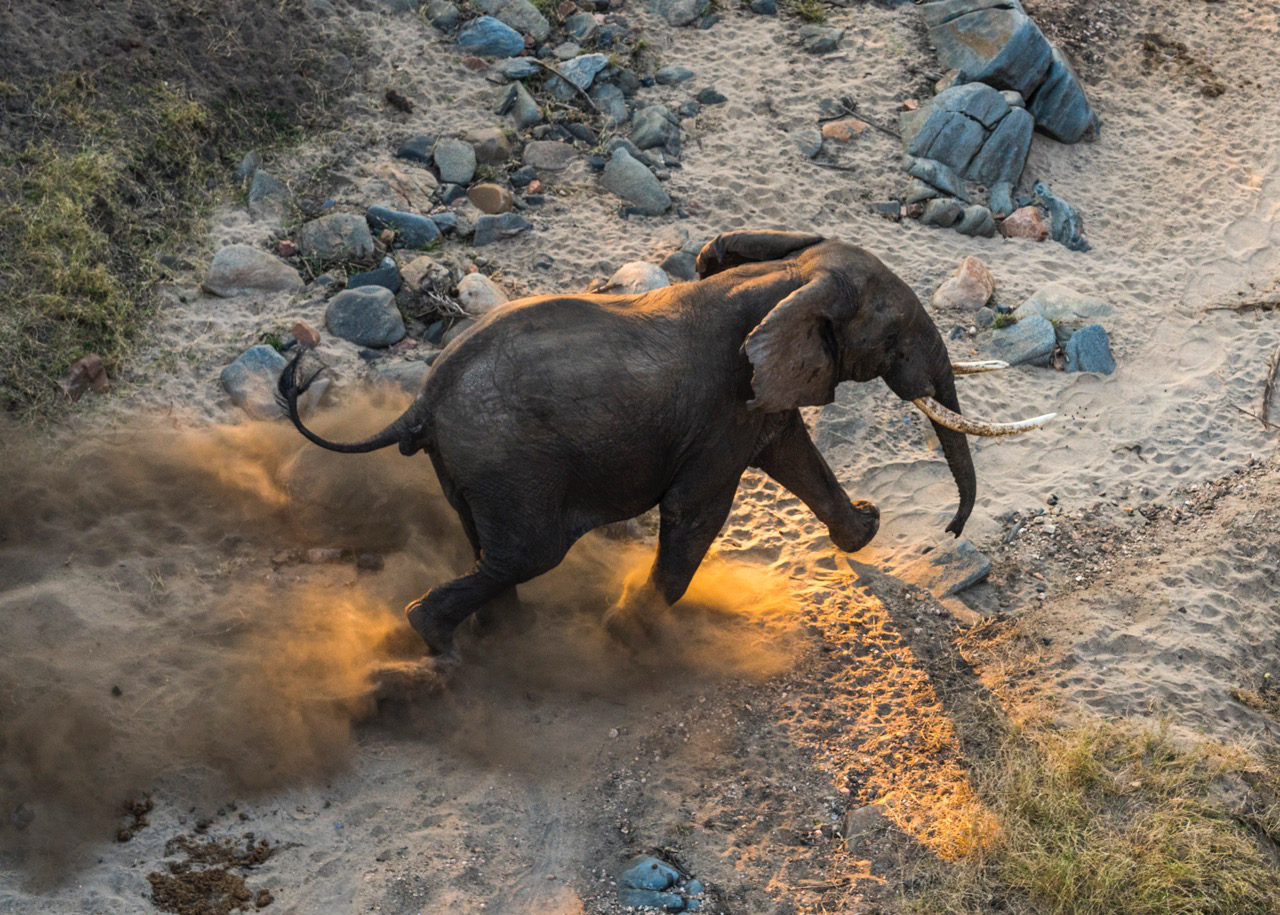 A elephant as seen from above.