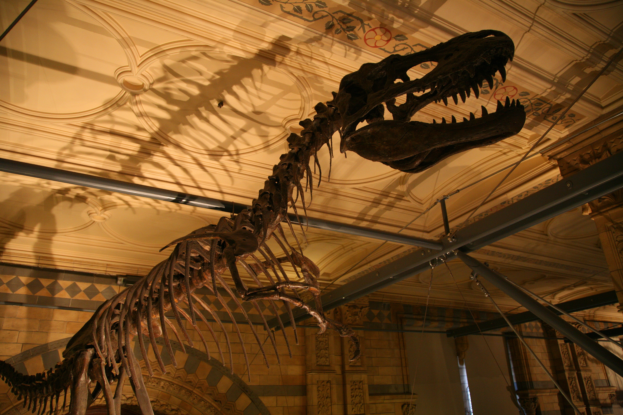 The Dinosaur gallery at the Natural History Museum. London . Image: Feargus Cooney