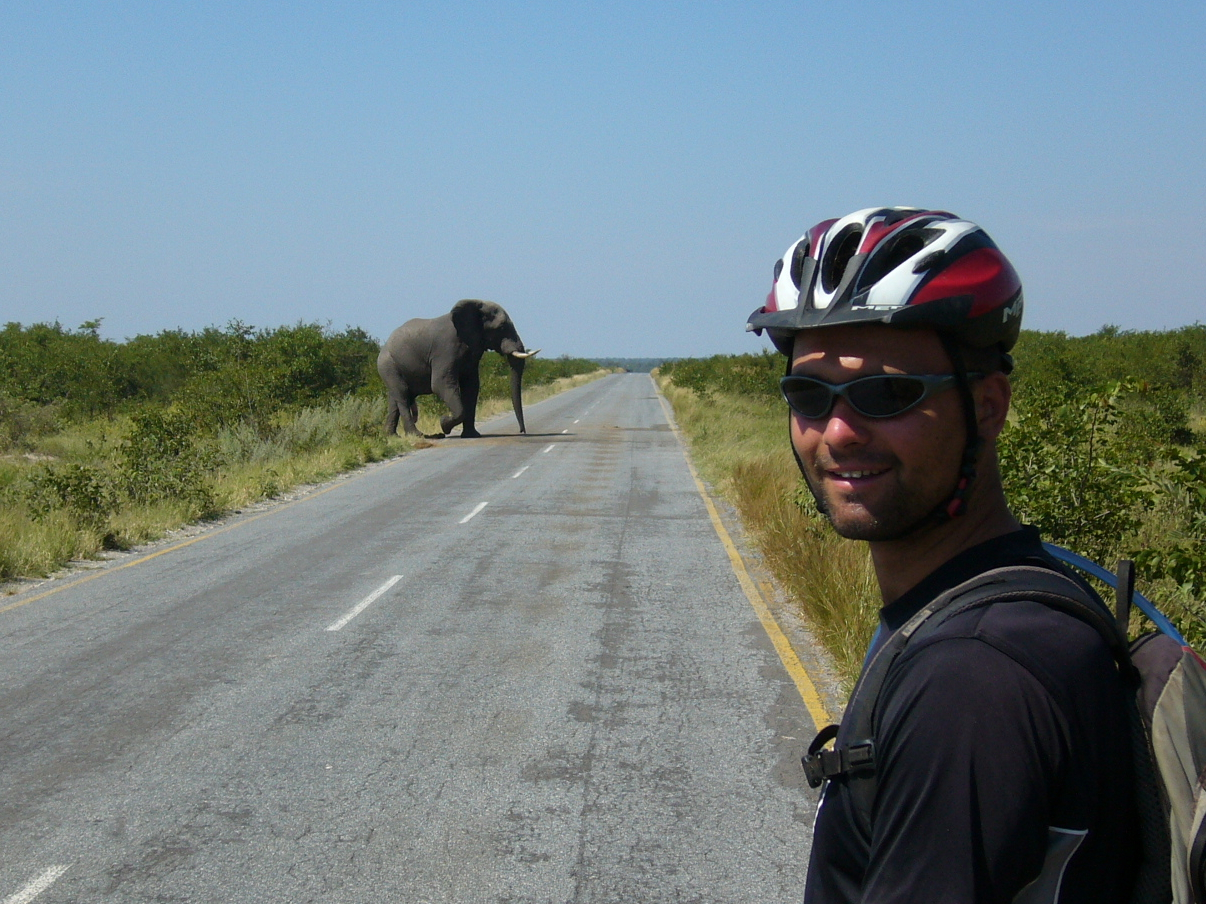 Cyclist meets an elephant on the road