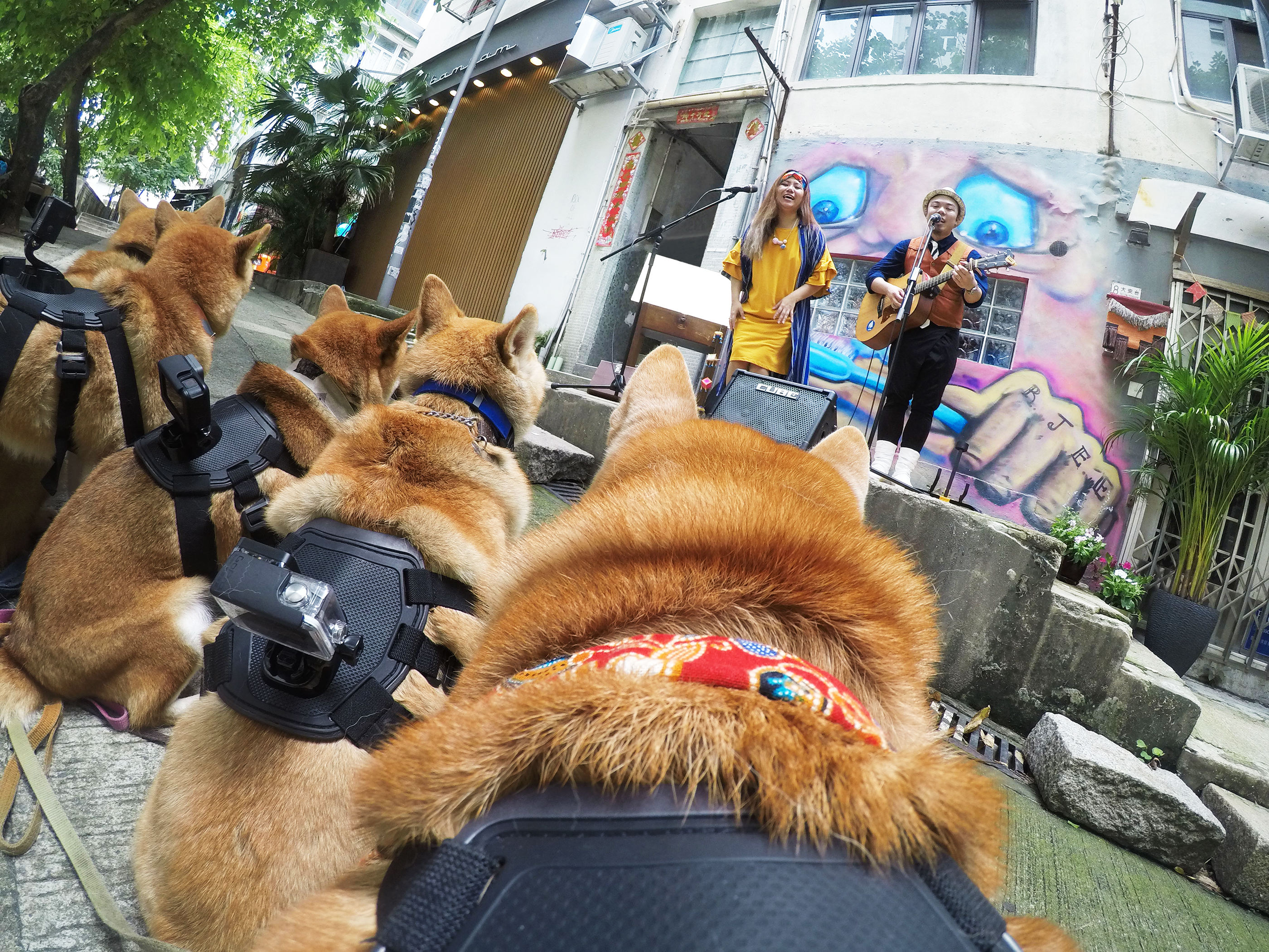 The back-mounted cameras were triggered by happy tail wagging.