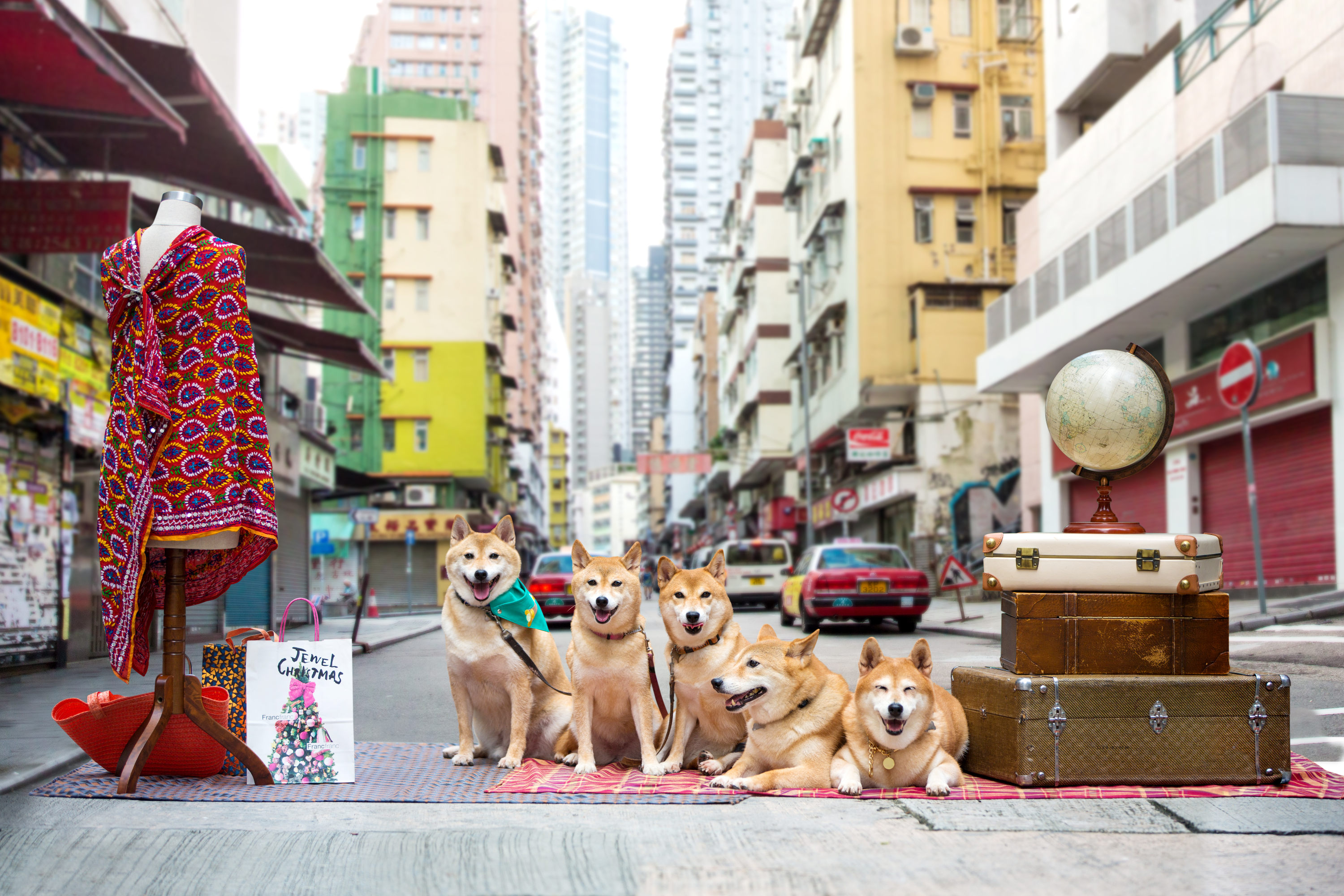 The WE5 family of local Shiba Inus have photographed Old Town Central in a unique way.