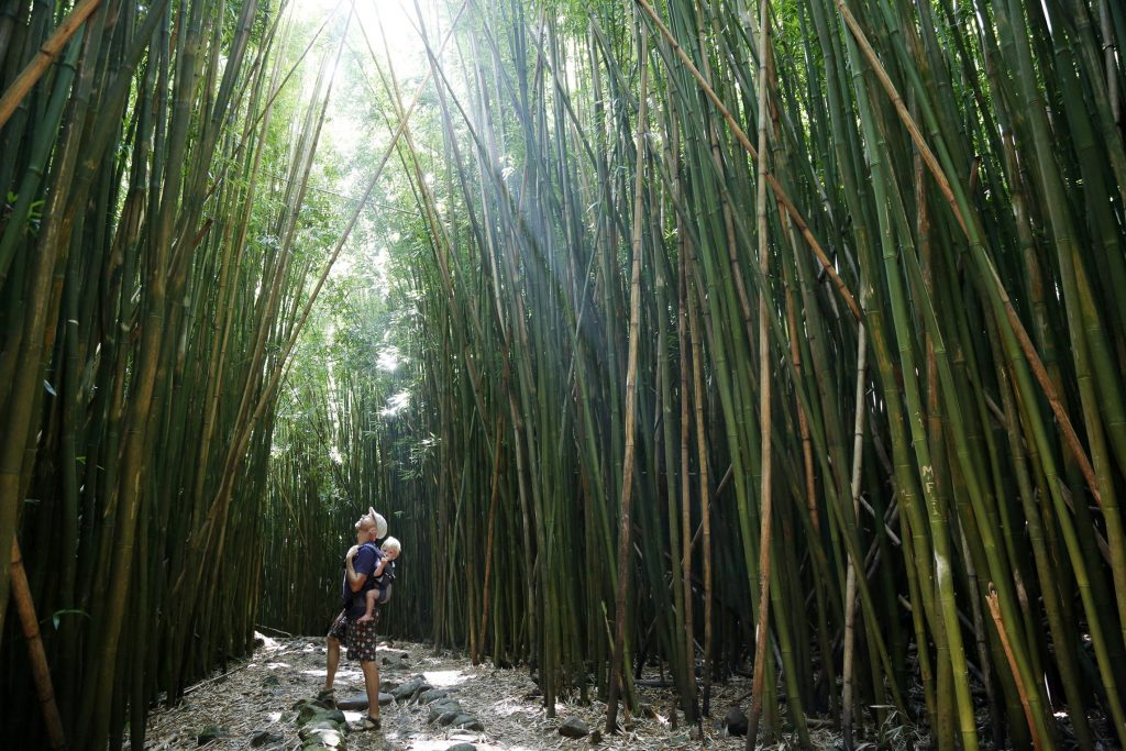 Father carrying baby son looking up at tall bamboo.