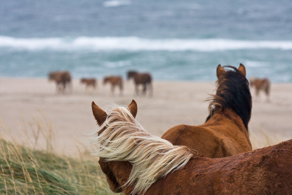 A Photographer Has Captured The Beauty Of The Wild Horses Of Sable Island Lonely Planet