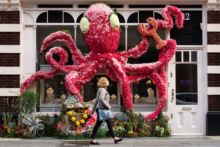 The Chelsea Flower Show in bloom