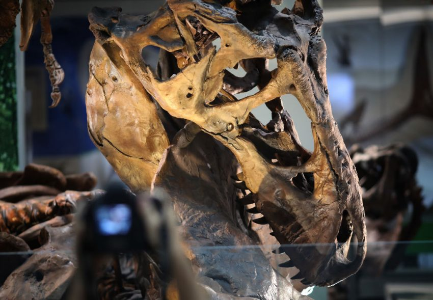 See a T. rex at the Smithsonian's National Museum of Natural History