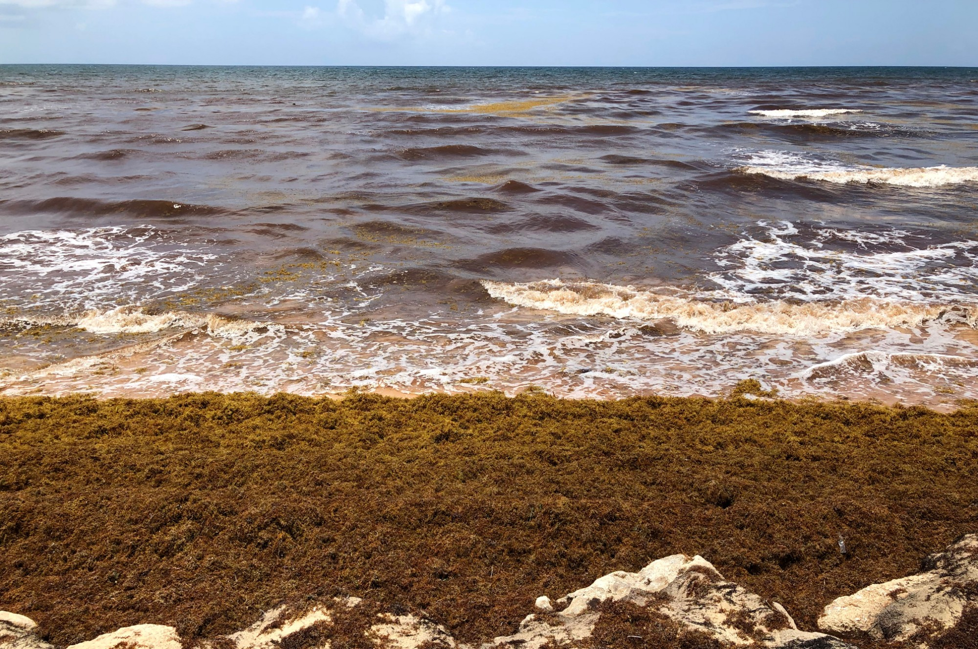 Stinky seaweed is coating beaches and coastlines in these